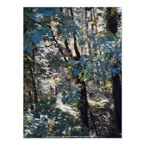 Light in My Forest #1 print