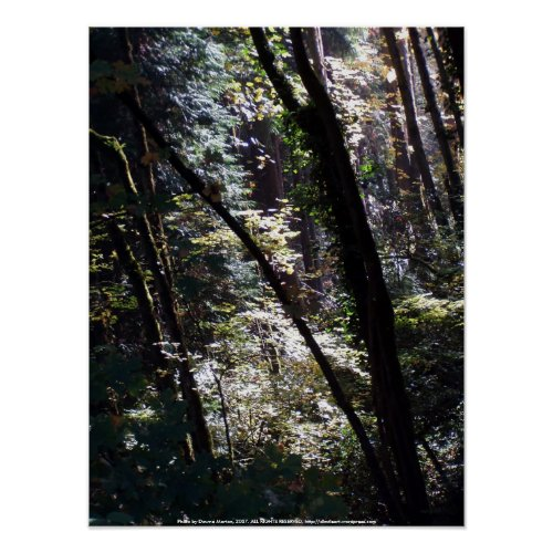 Light in My Forest #3 print