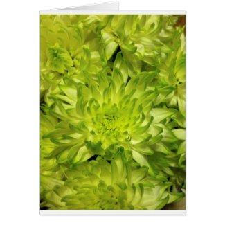 Lime Chrysanthemums