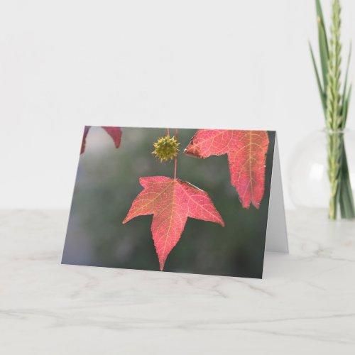 Liquid Amber Tree - Blank Greeting Card