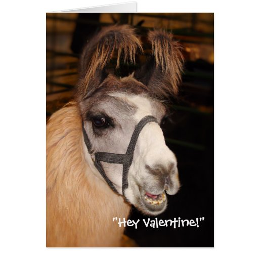 Llama Llove Valentines Day Card Zazzle