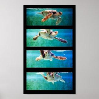 Loggerhead Sea Turtle Study