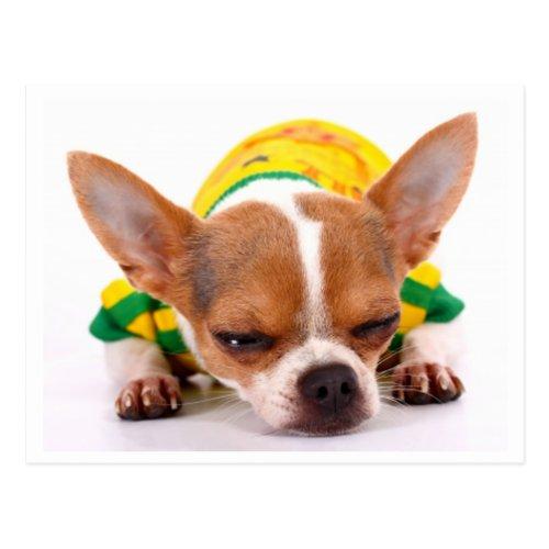 Love Chihuahua Puppy Dog Post Card