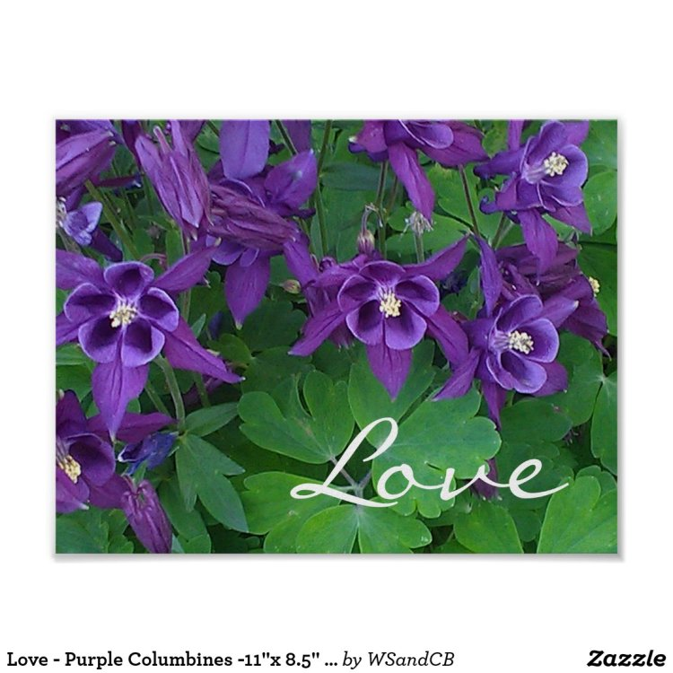 Love - Purple Columbines -11 x 8.5 Poster