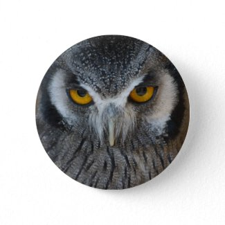 Macro Black and White Owl button