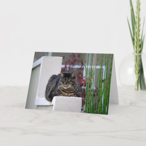 Maine Coon Cat in Garden Greeting Card card