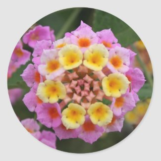 Makro: Pink and Yellow Lantana Flower Round Stickers