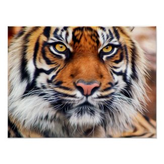Male Siberian Tiger Poster