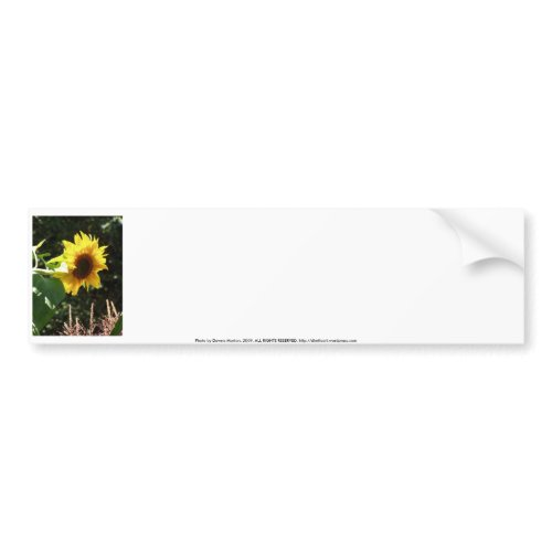 maternal sunflower bumpersticker