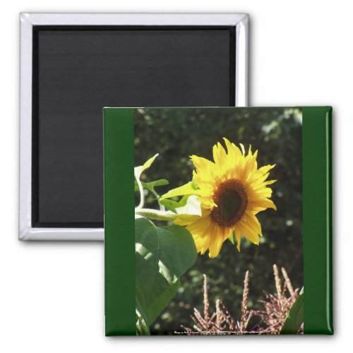maternal sunflower magnet