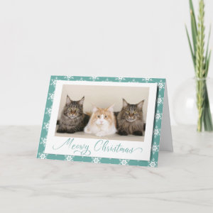 Meowy Christmas Cute Cat Holiday Snowflake Card