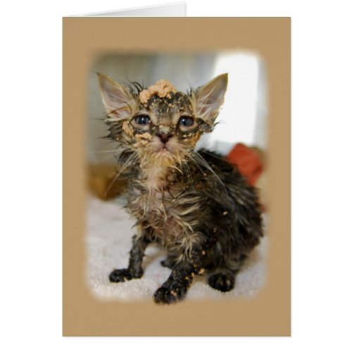 Messy Kitten Card