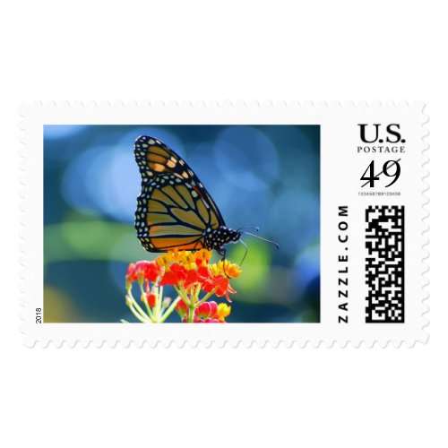 Monarch Butterfly on Tropical Milkweed Postage Stamps