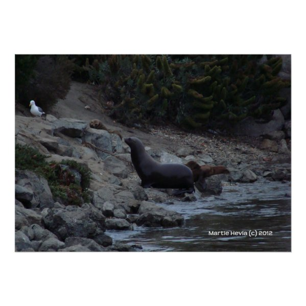 Monterey Watering Hole zazzle_print