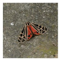 Moth, Acrylic Print. Acrylic Wall Art | Zazzle