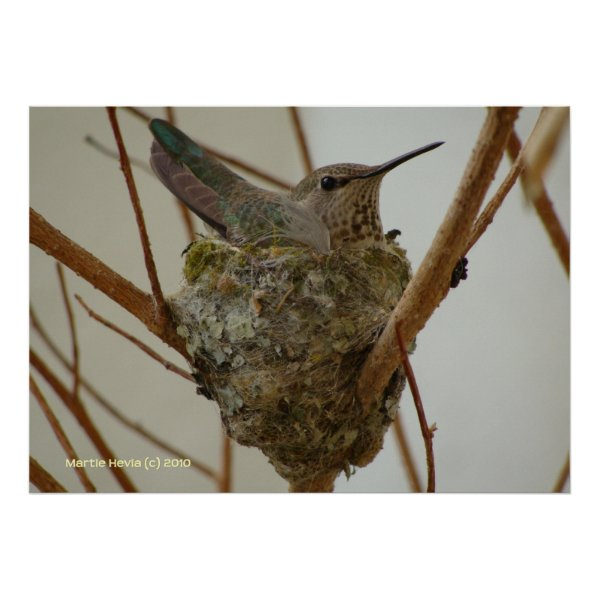Mother Hummingbird print