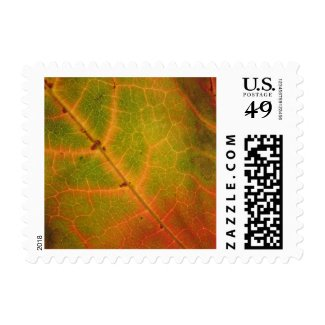 Multi-colored Autumn Leaf   Postage Stamps