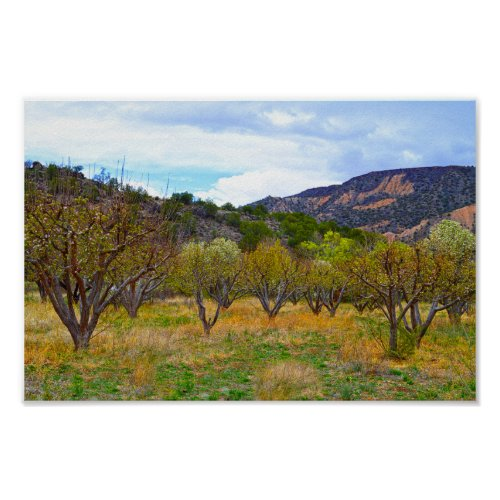 New Mexico Apple Orchard in Bloom Poster