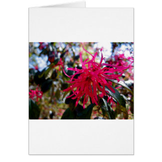 North Carolina Red Star Anise Card