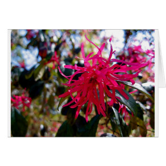 North Carolina Red Star Anise Greeting Cards