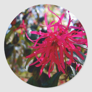 North Carolina Red Star Anise Round Stickers