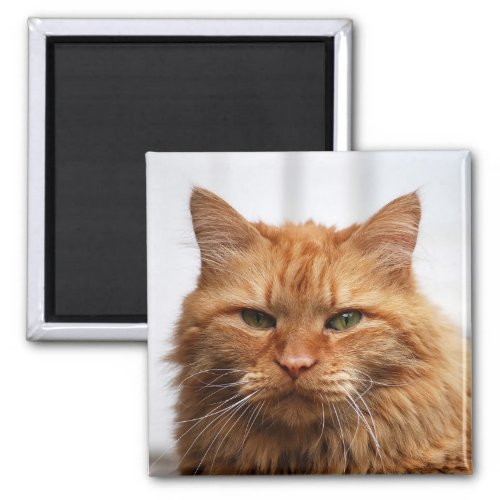 Norwegian Forest Cat Magnet magnet