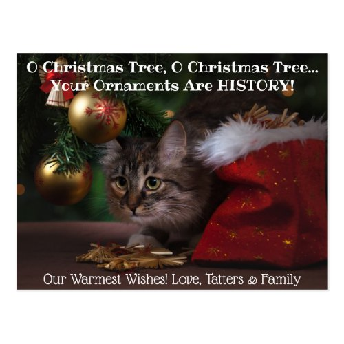 O Christmas Tree Cat Holiday Photo Postcard