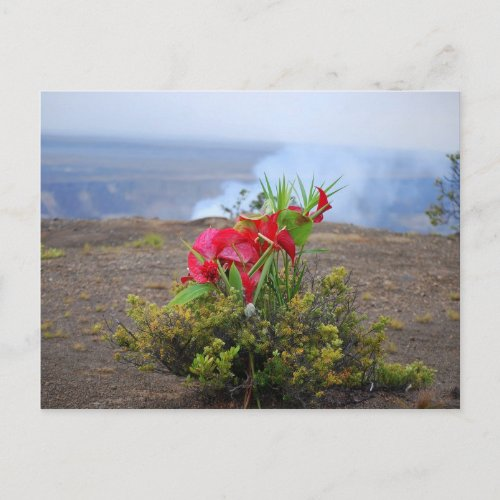 Offering to Pele, HawaiianVolcano Goddess Postcard postcard