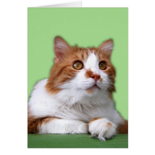 Orange and White Thoughtful Cat Cards