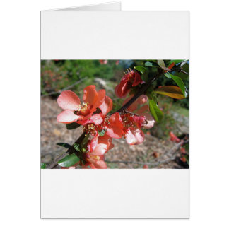 Orange Branch Greeting Card