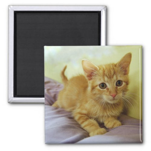 Orange Striped Tabby Kitten Magnet magnet