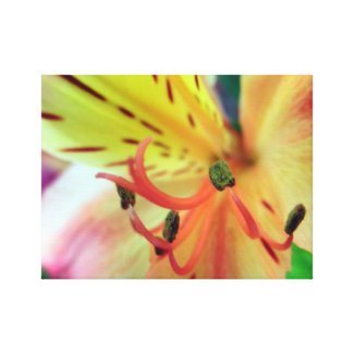 Orange Yellow Flowers Floral Print Wrapped Canvas Stretched Canvas Prints