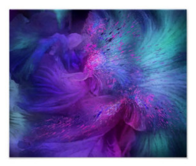 Orchid Moods  Fine Art Poster Print Poster