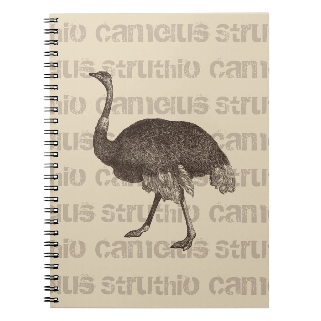 Ostrich Latin Name Notebook