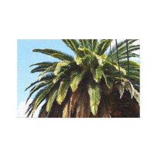 Palm Tree by Julia Hanna Gallery Wrapped Canvas
