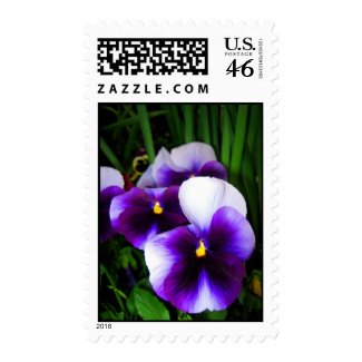 Pansy flowers zazzle_stamp