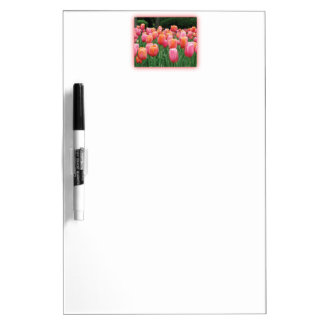 Peach and Pink Tulips Dry-Erase Board