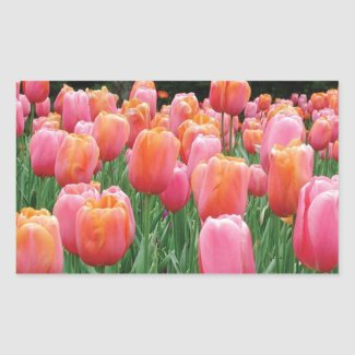 Peach and Pink Tulips Rectangle Sticker