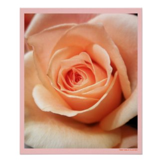 Peach Rose Bud Poster Print by S.Lynnette