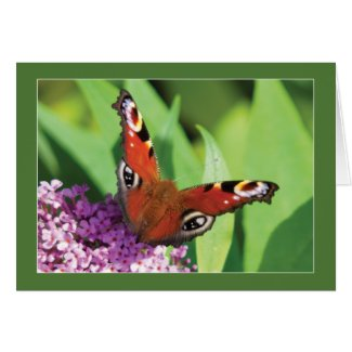 Peacock Butterfly on Buddleia Blank Greeting Card