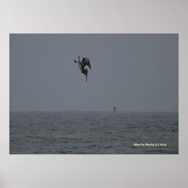 Pelican Dives Print