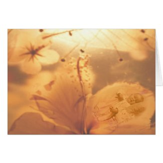 Petal Baby Greeting Card