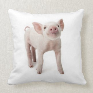 Pig Standing Looking Up Pillows