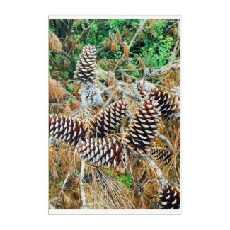 Pine Cones in coastal South Carolina Acrylic Wall Art