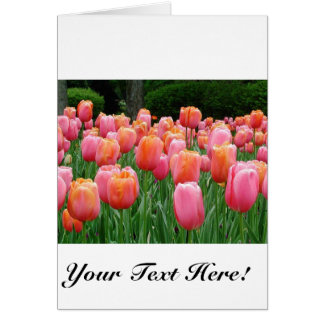 Pink and Peach Tulips Card