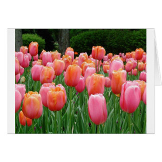 Pink and Peach Tulips Cards