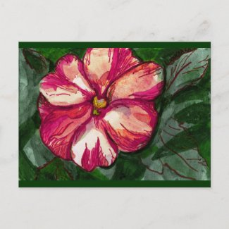Pink Balsam Flower Post Cards