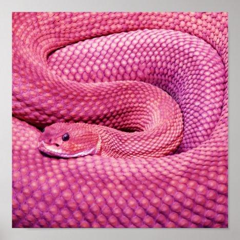 Pink Basilisk Rattlesnake Poster