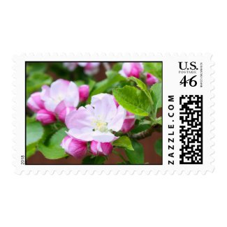 Pink cherry blossom zazzle_stamp