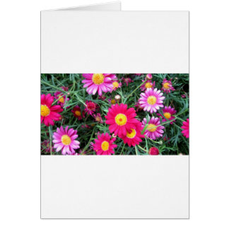 Pink Daisies Cards